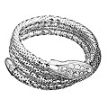 Guess White Crystal Snake Bracelet - Product number 1398482