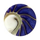 Mi Moneda Nautilus medium purple shell coin - Product number 1452215