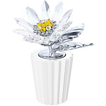 Swarovski Crystal Daisy - Product number 1635921